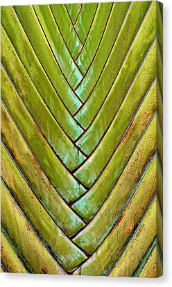 Canvas Print featuring the photograph Fan Lines by Britt Runyon