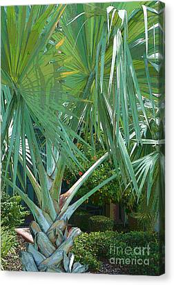 Fan Palm Canvas Print