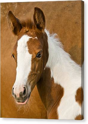 Fancy Canvas Print by Ron  McGinnis