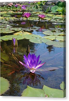 Canvas Print featuring the photograph Fantasy by Elizabeth Sullivan