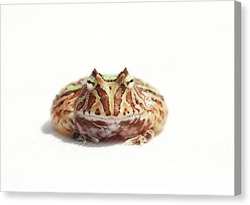 Fantasy Horned Frog Canvas Print by Www.tommaddick.co.uk
