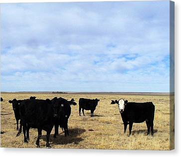 Canvas Print featuring the photograph Farm Friends by Clarice  Lakota