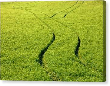 Farm Tracks Canvas Print by Mike  Dawson