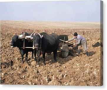 Farmer Fertilising A Field Canvas Print by Bjorn Svensson