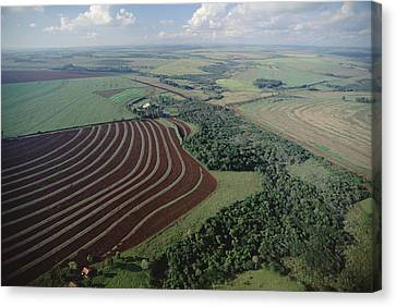 Contour Farming Canvas Print - Farming Region With Forest Remnants by Claus Meyer