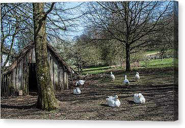 Farmyard Geese Canvas Print by Dawn OConnor