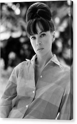 Father Goose, Leslie Caron, 1964 Canvas Print by Everett