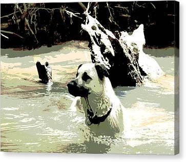 Favorite Swimming Hole Canvas Print by Dorrie Pelzer