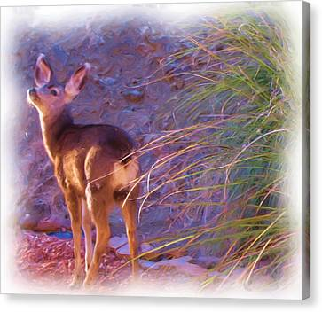 Fawn In Last Light Canvas Print by FeVa  Fotos