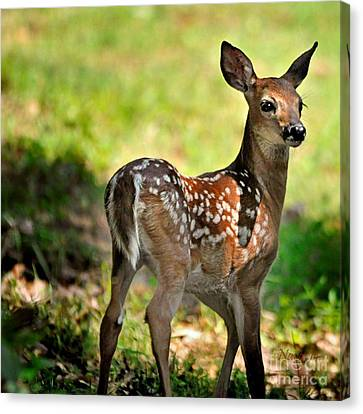 Fawn Toddler Canvas Print by Nava Thompson