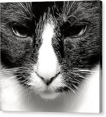 Fearless Feline Canvas Print by Lenny Carter