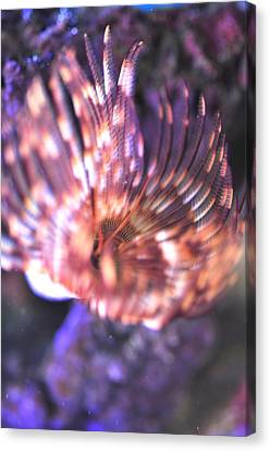Canvas Print featuring the photograph Feather Duster  by Puzzles Shum