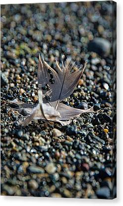 Canvas Print featuring the photograph White Feather by Marilyn Wilson