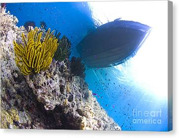 Feather Stars With A Boat Canvas Print by Steve Jones