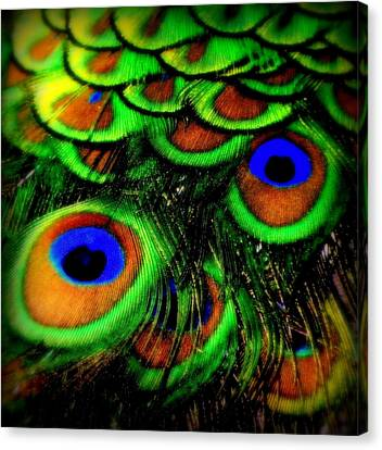 Feathers Canvas Print by Karen Wiles