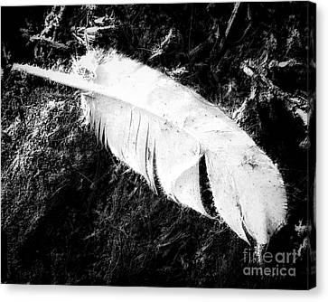 Featherweight Canvas Print by Mimulux patricia no No