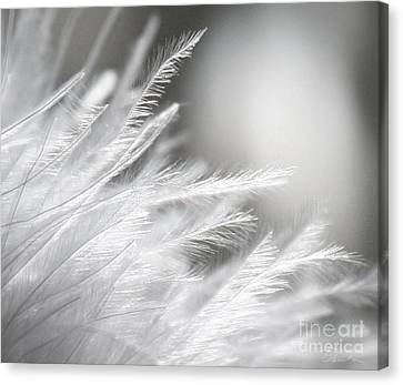 Feathery White Canvas Print