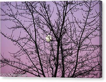 Canvas Print featuring the photograph February's Full Moon by Rachel Cohen