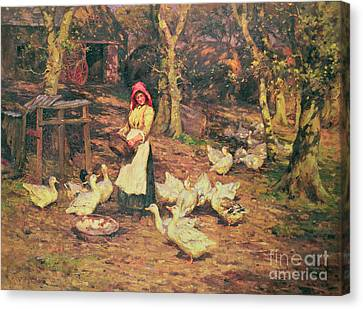 Feeding The Ducks Canvas Print by Joseph Harold Swanwick