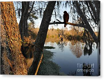 Canvas Print featuring the photograph Feel Like Being Watched by Dan Friend