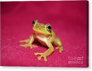 Feelin Froggy Canvas Print by Lynda Dawson-Youngclaus