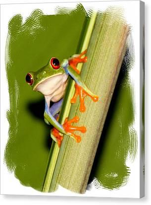 Feeling Froggy Canvas Print by Myrna Bradshaw