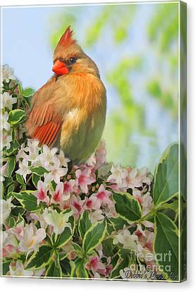Canvas Print featuring the photograph Female Cardnial In Wegia Digital Art by Debbie Portwood