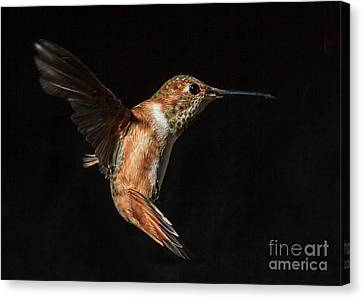 Female In Flight I Canvas Print by Carl Jackson