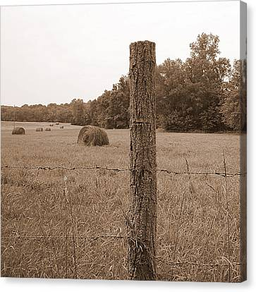 Fence And Field Canvas Print by Sheila Harnett