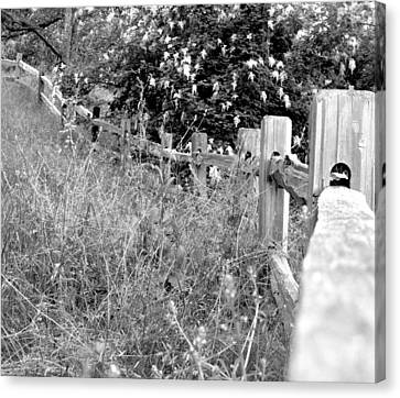 Fence Canvas Print by Mark Armstrong