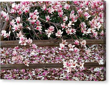 Canvas Print featuring the photograph Fence Of Flowers by Elizabeth Winter