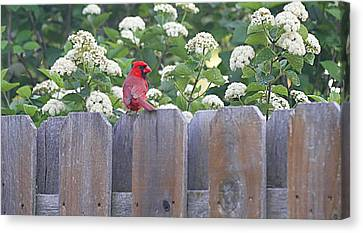 Canvas Print featuring the photograph Fence Top by Elizabeth Winter