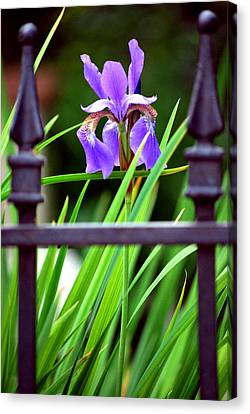 Canvas Print featuring the photograph Fenced In by Amee Cave