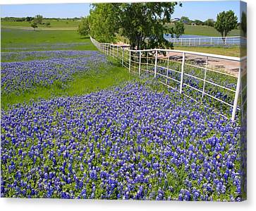 Canvas Print featuring the photograph Fenceline Flowers by Lynnette Johns