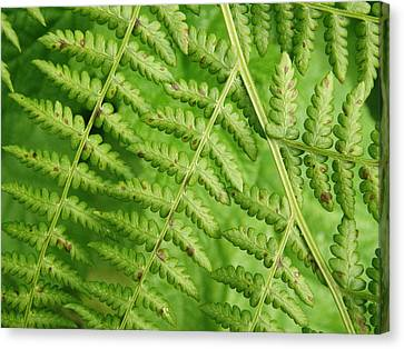 Canvas Print featuring the photograph Fern Green by Cheryl Perin