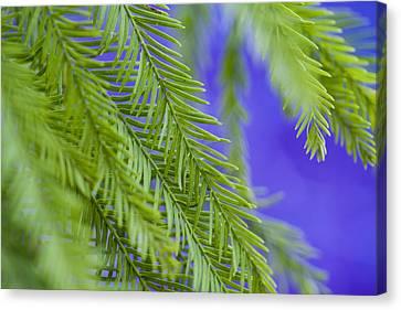 Fern In Blue Canvas Print