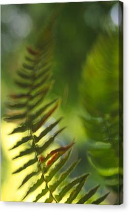 Fern Leaves Canvas Print by Alan Sirulnikoff