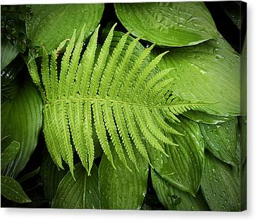 Fern On Top Canvas Print by Nafets Nuarb