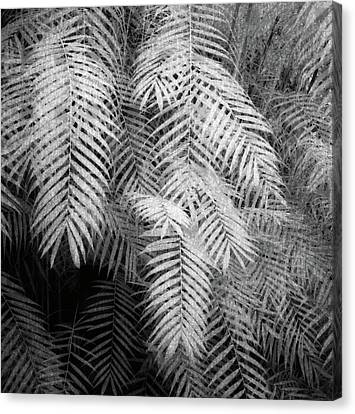 Fern Variations In Infrared Canvas Print by Andreina Schoeberlein