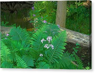 Ferns And Phlox Canvas Print by Michael Peychich