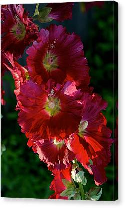 Canvas Print featuring the photograph Fertile by Joseph Yarbrough