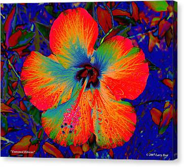 Festonned Hibiscus Canvas Print