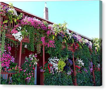 Canvas Print featuring the photograph Festooned In Flowers by Will Borden