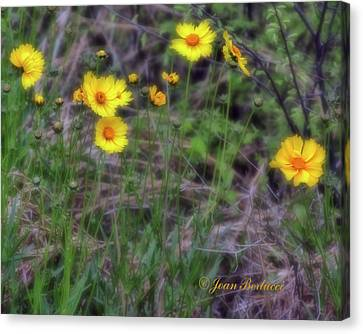 Canvas Print featuring the photograph Field Flowers by Joan Bertucci