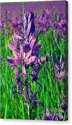 Canvas Print featuring the photograph Field Of Camas In Oregon by Mindy Bench