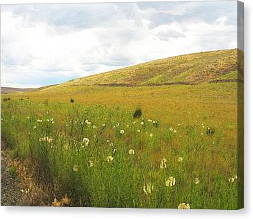 Canvas Print featuring the photograph Field Of Dandelions by Anne Mott