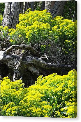 Canvas Print featuring the photograph Field Of Flowers 2 by Gerald Strine