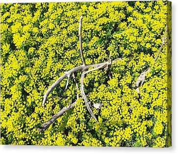 Field Of Flowers 3 Canvas Print by Gerald Strine