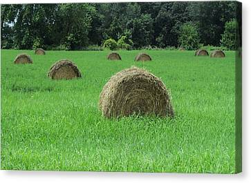 Field Of Hay Canvas Print by Todd Sherlock