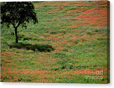 Field Of Poppies. Canvas Print by Bernard Jaubert